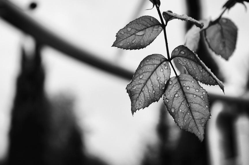 leaves_rain_drops_water_plan_nature_leaf_plant-601144